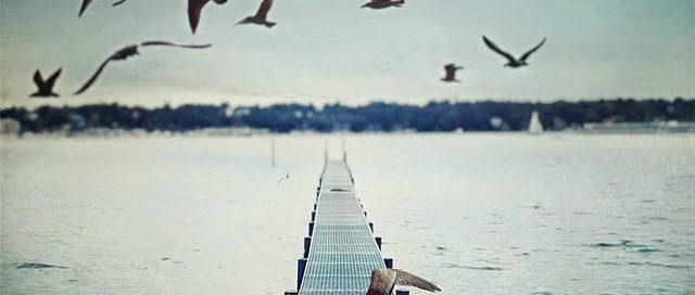 gulls nature photography sea Favim.com 441433 • Neurita   Blog de Psicología