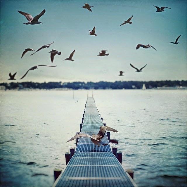 gulls nature photography sea Favim.com 441433 • Neurita 📣 Marketing Sanitario